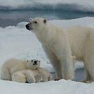 Hey Mum! by Steve Bulford