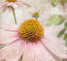 A Whisper of Pink by Susan Werby