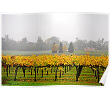 Winery Mist Poster