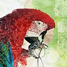 HC 003 Macaw by Heloisa Castro