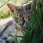 cat in the grass by nicolette