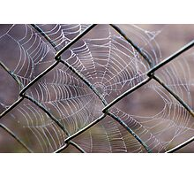 Web of Intrigue Photographic Print