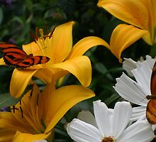 Butterflies and Flowers by Jane Girardot