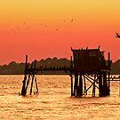 cormorant condo by J.K. York