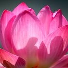 Flowers - By Dave Lloyd by Dave Lloyd