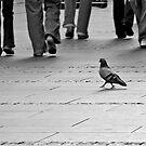 Afternoon city walk by Peco Grozdanovski
