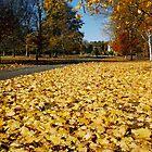 Autumn by morrigan
