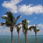 Palm trees in the keys by mbuban