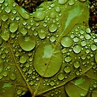 Morning Dew by Sherstin Schwartz