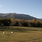 Smoky Mountain Horse Ranch by shotzbyjay