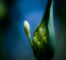 Emerging by Sarah Moore