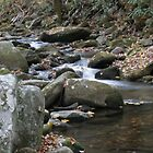 Smoky Mountain Stream II by shotzbyjay