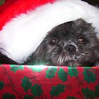 Christmas Box cutie by JILLIAN  POSSEHL