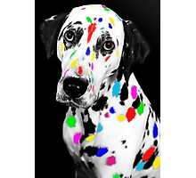 Multi-coloured Dalmatian Photographic Print