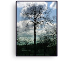The fate landscape trees Canvas Print
