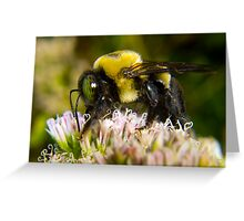 Bumble Bee's are Fuzzy Greeting Card