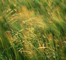 Grass in the Wind by Chris Cutler