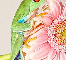 Tree Frog  by Val Saxby