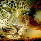 Leopard ~ A Coolaboration by Mundy Hackett
