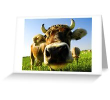nosy cow Greeting Card