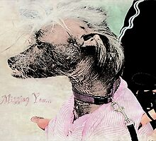 "Chinese Crested Dog ""Missing You"" ~ Greeting Card by Susan Werby"
