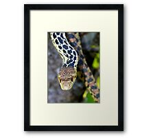 Gopher Snake. Figueroa Mountain, Santa Ynez, CA Framed Print