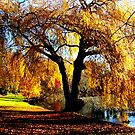 Autumn Hues by Varinia   - Globalphotos