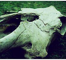 Death by Bryan Davidson