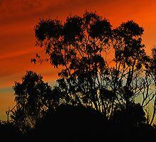 The gum tree by Neophytos