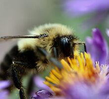 I'm glad I don't have pollen allergies! by Keala