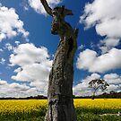 Look-up in the sky! by Robert Mullner
