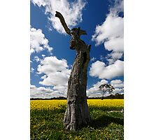 Look-up in the sky! Photographic Print