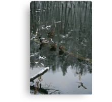 Ducks in the winter reflection Canvas Print
