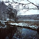 The first snow in the Green Lake by Antanas