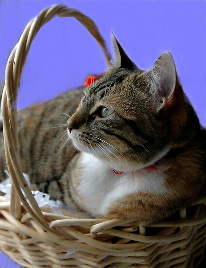Kitten In Basket by Kathleen Struckle