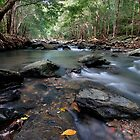 Spring Creek  by Robert Mullner
