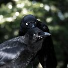 Mother crow and baby by Robyn Lakeman