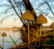 Another world - mushrooms at lake by NicoleBPhotos
