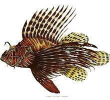 Lion Fish by Vintagee