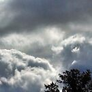 Clouds in light above tree by Nadia Korths