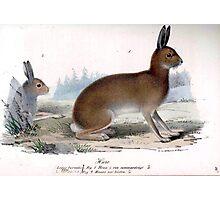 Woodland Rabbit Photographic Print