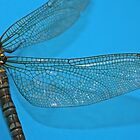 Dragonfly on blue by allisond