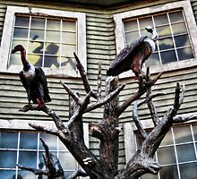 Our neighbours' house by Kurt  Tutschek