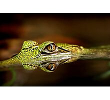 Gator Eyes Photographic Print