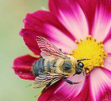 Gentle Bumblebee by BlueEyedBrooke