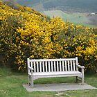 A seat for eternity... by gsklirisg