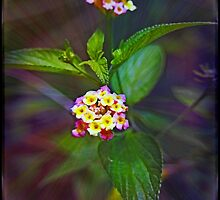 Lantana - not so pretty by Kristine Kowitz