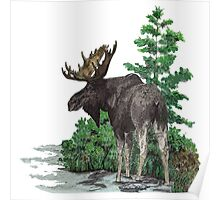 Moose watercolor  Poster
