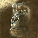 Gorilla in color pencil by Marlene Piccolin