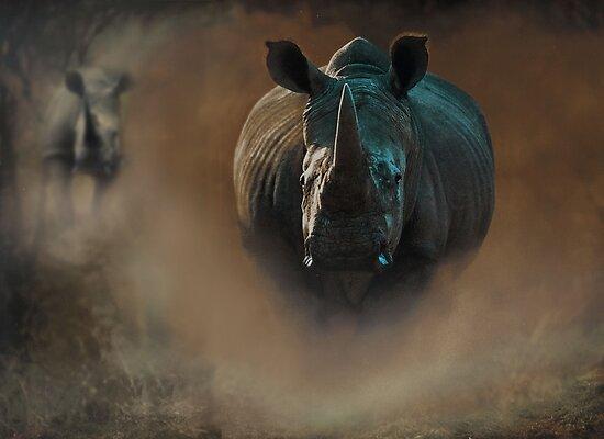 Steamy Rhino by Robert  Anthony